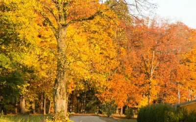 Ayurvedische Gesundheitstipps für die beginnende kühle Jahreszeit